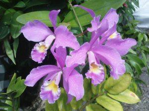 orchid rumah kecil 13